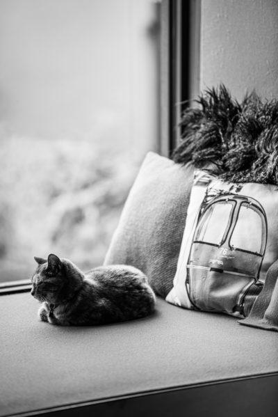 Maison Bourdeau - chat - bord de fenêtre - coussins -JMV Resort